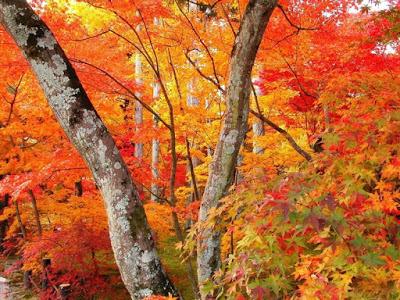 【益曼中醫專欄】秋季養生飲食可以參考唷